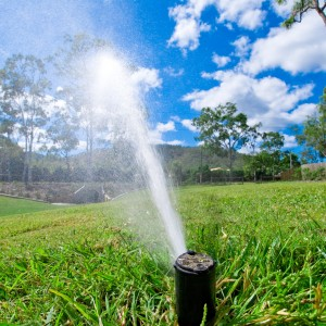 Sprinkler watering lawn grass